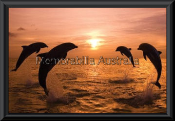 Dolphins At Dawn Poster Framed