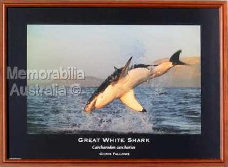 Great White Shark Print 1