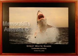 Great White Shark Print 2