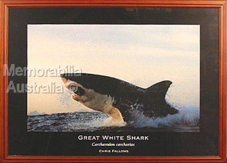 Great White Shark Print 4
