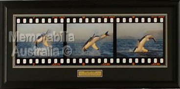 Great White Shark Frame by Frame Print 1