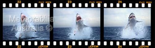 Great White Shark Frame by Frame Print 2