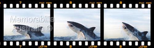 Great White Shark Frame by Frame Print 3