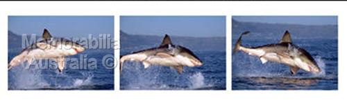 Great White Shark Frame by Frame Print 4