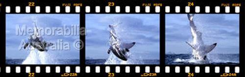 Great White Shark Frame by Frame Print 5